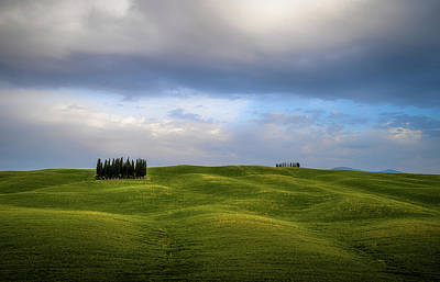 Tuscan Cypresses Poster
