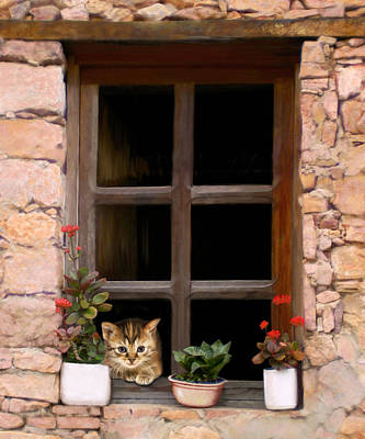 Tuscan Kitten In The Window Poster