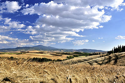 Tuscan Landscape With Cornfield Poster