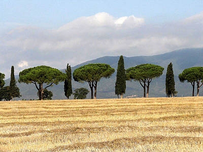 Poster featuring the digital art Tuscany Trees by Julian Perry