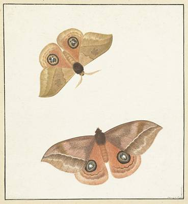 Twee Vlinders Poster by MotionAge Designs
