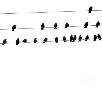 Twenty Blackbirds Poster
