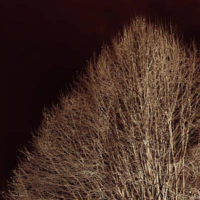 Twigs Poster by Wim Lanclus