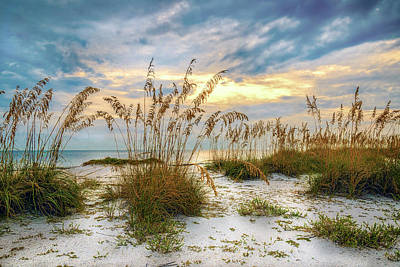 Twilight Sea Oats Poster by Steven Sparks