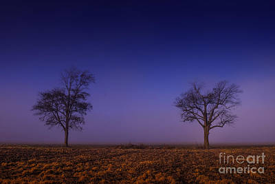 Poster featuring the photograph Twin Trees In The Mississippi Delta by T Lowry Wilson
