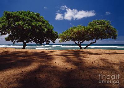 Twin Trees Kauai Poster