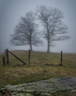 Twin Trees Late Fall Foggy Morning Poster