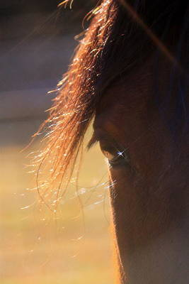 Twinkle Eyed Horse Poster by Angie Wingerd
