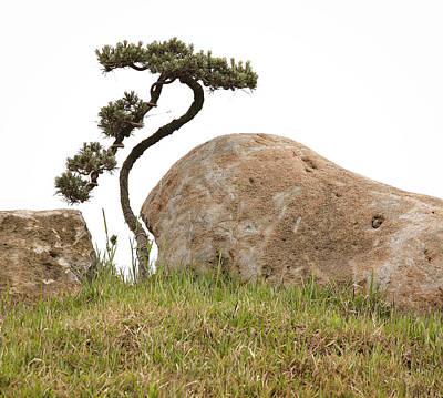 Twisted Bonsai Tree And Rocks Poster by Douglas MacDonald