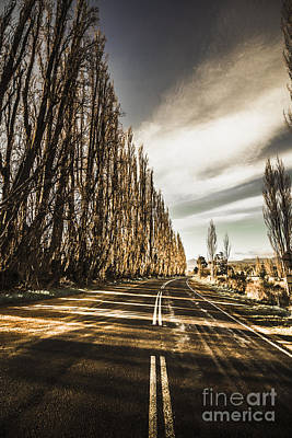 Twisted Roads And Dead Trees Poster by Jorgo Photography - Wall Art Gallery