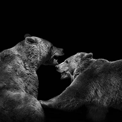 Two Bears In Black And White Poster
