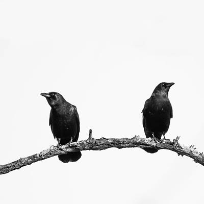 Two Black Crows One Branch White Square Poster by Terry DeLuco