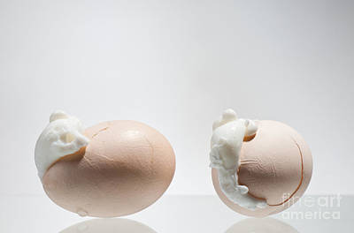Two Boiled Cracked Eggs Shells With Egg White  Poster