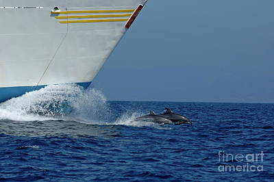 Two Bottlenose Dolphins Swimming In Front Of A Ship Poster by Sami Sarkis