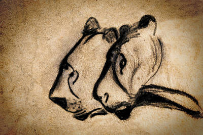 Two Chauvet Cave Lions Poster by Weston Westmoreland