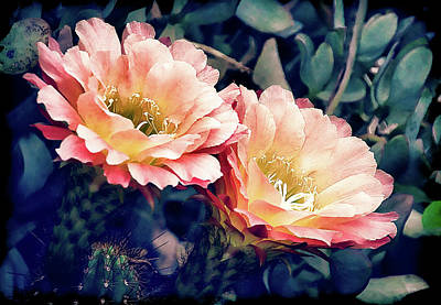 Poster featuring the photograph Two Desert Blooms Apricot Glow by Julie Palencia