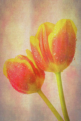 Two Dewy Tulips Poster by Garry Gay