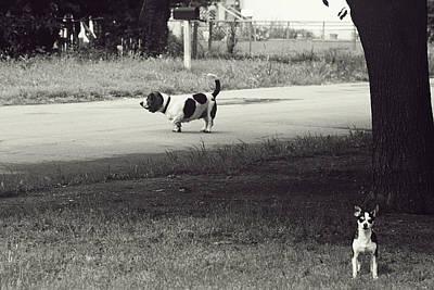 Little Pooch, Big Pooch Poster by Toni Hopper