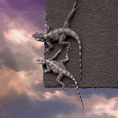 Two Lizards On The Edge Of The Roof Poster