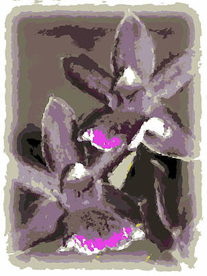Two Orchids Poster by Ann Tracy