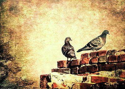 Two Pigeons Poster by Bob Orsillo