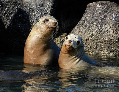 Poster featuring the photograph Two Quiet Sea Lions by Susan Wiedmann