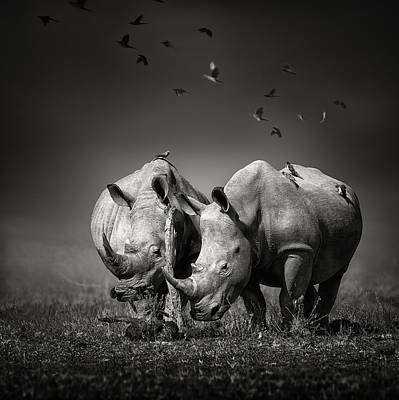 Two Rhinoceros With Birds In Bw Poster