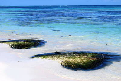 Two Seaweed Mounds On Punta Cana Resort Beach Poster