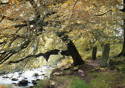 Two Standing Stones Beside Hebden Water In Autumn  Poster by Philip Openshaw
