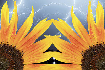 Two Sunflower Lightning Storm Poster