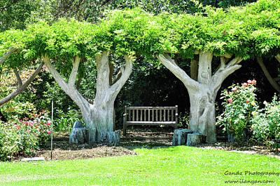 Two Tall Trees, Paradise, Romantic Spot Poster