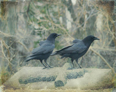 Two Tombstone Crows Poster by Gothicrow Images