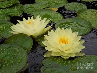 Two Water Lilies In The Rain Poster