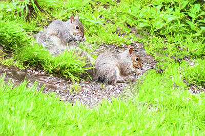 Two Young Gray Squirrels Feeding. Poster