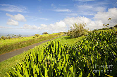 Ulupalakua Country Road Poster by Ron Dahlquist - Printscapes