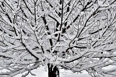 Unbelievable Tree Poster