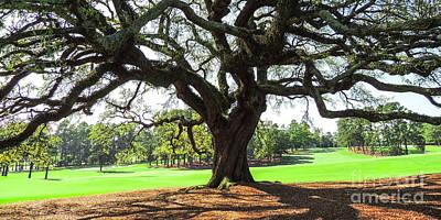 Under An Augusta Oak Poster