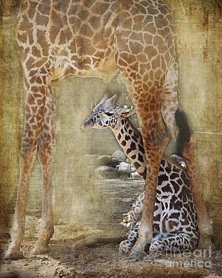 Under Cover, Giraffe, Houston Zoo Poster