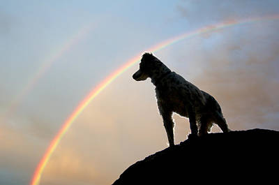 Under A  Rainbow Poster by Flying Z Photography By Zayne Diamond