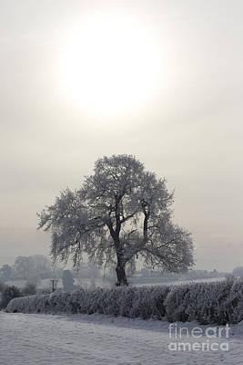 Under The Wintery Sky Poster by Angel  Tarantella