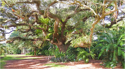 Underneath The Tree At Fairchild Troplical Garden Poster by Edier C