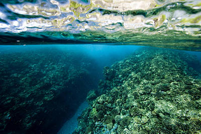 Underwater Coral Reef Views In Shallow Poster by Tim Laman