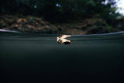 Underwater Leaf Poster
