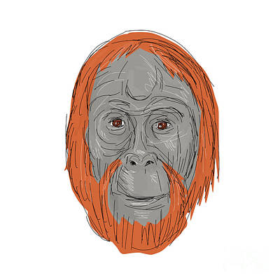 Unflanged Male Orangutan Drawing Poster