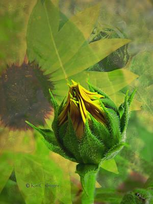 Unfolding Sunflower Poster