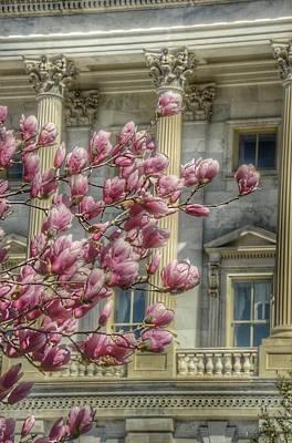 United States Capitol - Magnolia Tree Poster