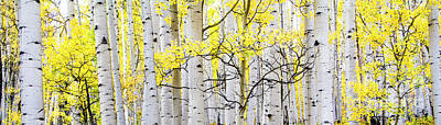 Unititled Aspens No. 6 Poster by The Forests Edge Photography - Diane Sandoval