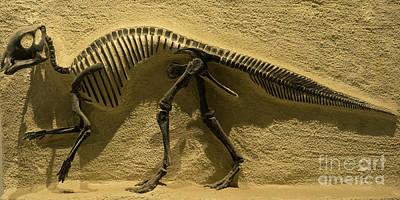University Of California Berkeley Dinosaur Fossil Inside The Valley Life Sciences Building Dsc4640 Poster
