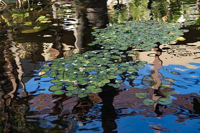 Unusual Waterlilies - A Charming Water Garden In Hawaii Poster