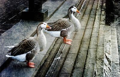 Urban Geese Poster